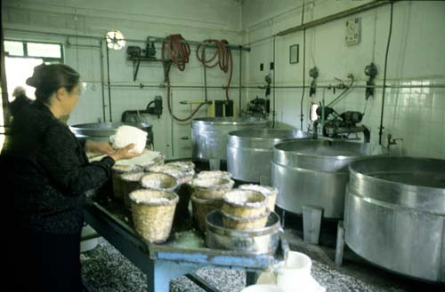 The village cheese making factory