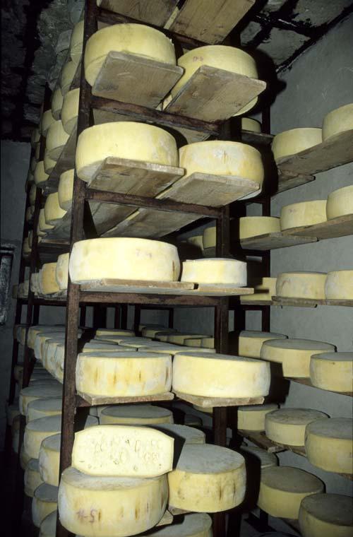 Cretan Graviera Cheeses