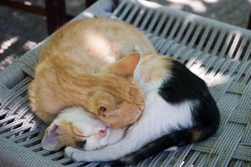 Sleeping kittens curled with each other